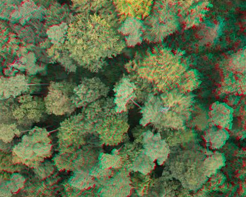Anaglyphenbild der 3D-Bäume