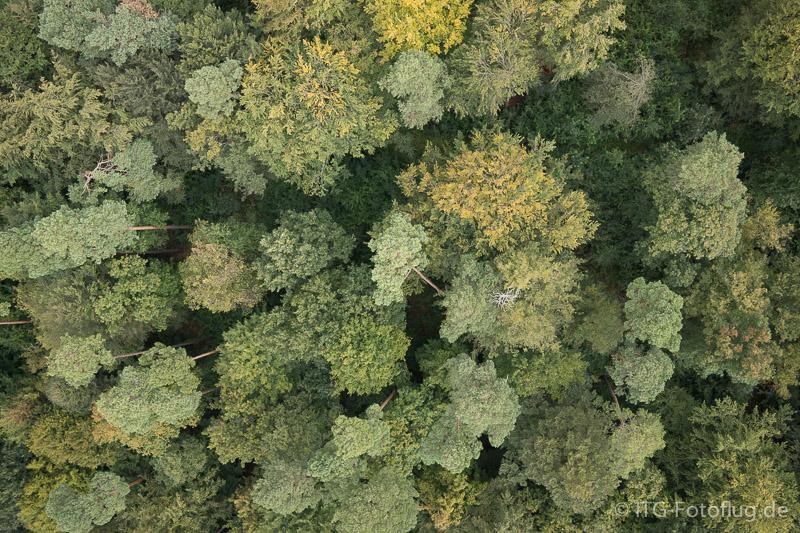 3D-Bäume Ursprungsfoto 1