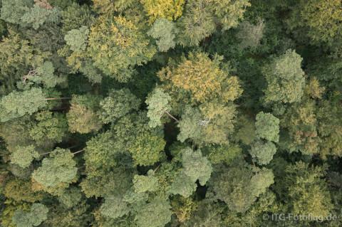 3D-Bäume Ursprungsfoto 2